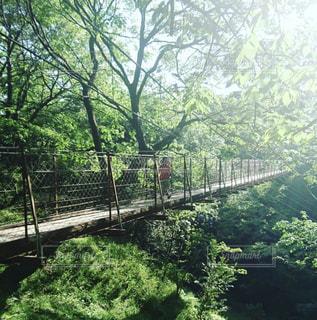 吊り橋を渡る女の子の写真・画像素材[1489710]