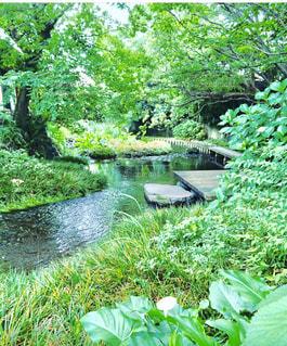三島市の世界かんがい遺産に指定された源兵衛川の写真・画像素材[1489929]