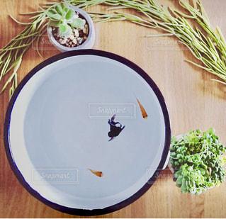 どんぶり金魚と多肉植物の写真・画像素材[1499049]