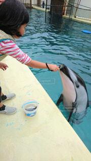イルカの餌やり体験🐬の写真・画像素材[1500131]