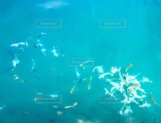 海中の魚の群れ🐟🐟🐟の写真・画像素材[1500376]
