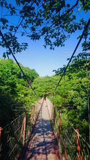 吊り橋を渡る女の子の写真・画像素材[1500772]