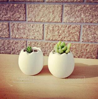 卵の殻の形の鉢に入った多肉植物2つ🥚🥚🌱🌱の写真・画像素材[1501962]