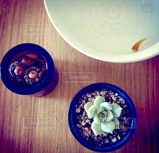 テーブルの上のどんぐりと金魚と多肉植物の写真・画像素材[1502015]