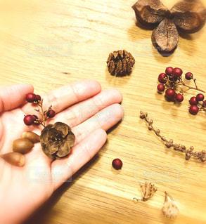 秋の木の実の写真・画像素材[1523056]