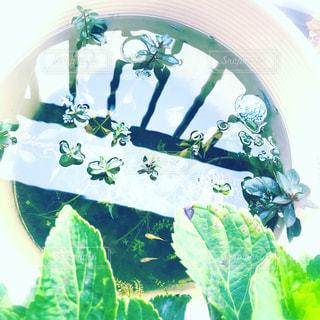 ベランダのメダカ鉢の写真・画像素材[1528210]