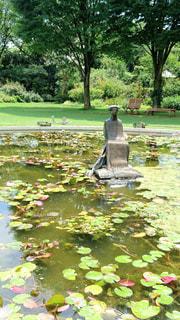 クレマチスの丘の睡蓮の池の写真・画像素材[1578325]