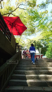 来宮神社の階段を上る女性の後ろ姿の写真・画像素材[1582829]