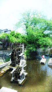 三島の水車の写真・画像素材[1582989]