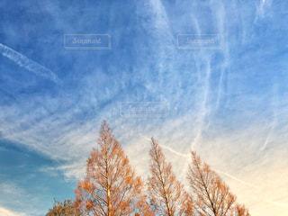 3本の木の写真・画像素材[1627006]