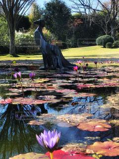 熱帯睡蓮の咲く彫刻のある池の写真・画像素材[1627013]