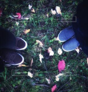 草の上の落ち葉とスニーカーの写真・画像素材[1656182]