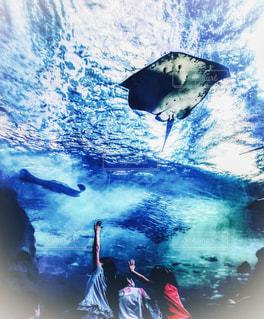 新江ノ島水族館にてエイの水槽と子供達の写真・画像素材[1669356]