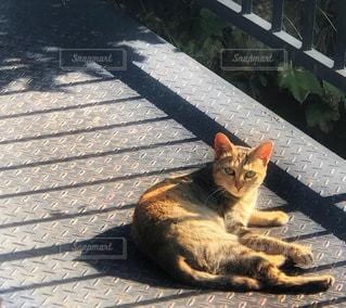 猫の写真・画像素材[1775501]