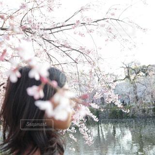桜の花咲く木の隣に立っている女の子の写真・画像素材[1932841]