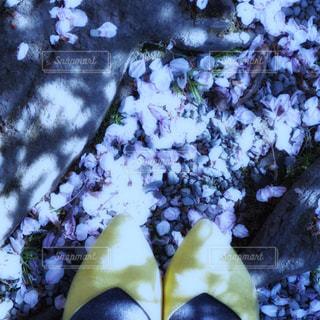 パンプスを履いた足元と落ちた桜の花びらの写真・画像素材[2001375]