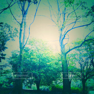 森の中の大きな木の写真・画像素材[2120354]
