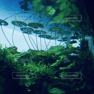 水草入りの水そうの写真・画像素材[2154388]