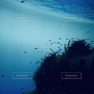 青い水槽に小魚と水草の写真・画像素材[2154390]