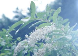 花のクローズアップの写真・画像素材[2186452]