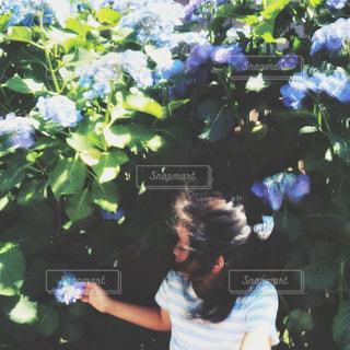 フィルム風の紫陽花と女の子の写真・画像素材[2223475]