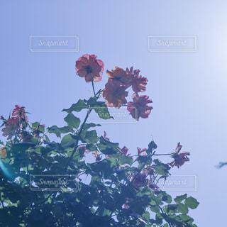 木の上の花の写真・画像素材[2259329]