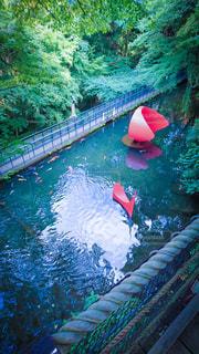 水のプールにいる鯉とアートの写真・画像素材[2267119]