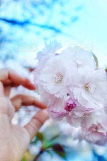花を持った手のクローズアップの写真・画像素材[2285818]