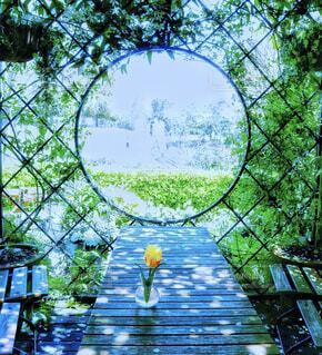 中庭のテーブルに一輪の花の写真・画像素材[2325656]
