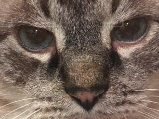 猫の顔の写真・画像素材[1487396]