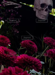 花とガイコツの写真・画像素材[1506754]