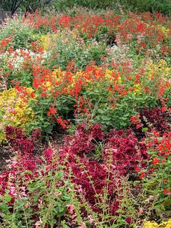 秋の花壇の写真・画像素材[1614882]