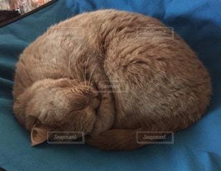 青い毛布の上で眠っている猫の写真・画像素材[1487097]