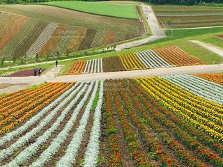 花いっぱいの写真・画像素材[1485946]