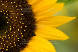 花の写真・画像素材[137431]