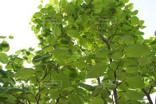 近くの木のアップの写真・画像素材[1485526]