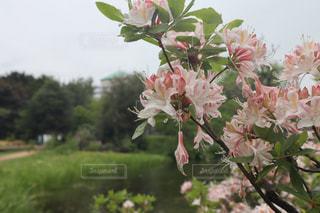 ピンクの花の写真・画像素材[2212178]