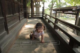 神社の境内をハイハイする女の子の写真・画像素材[1491537]