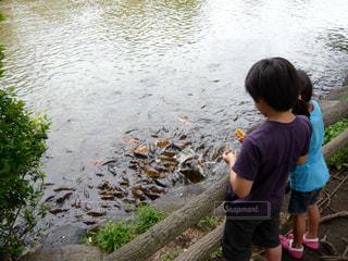 公園の池で鯉に餌をあげる兄妹の写真・画像素材[1509608]