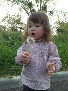 たんぽぽを吹く女の子の写真・画像素材[1515472]