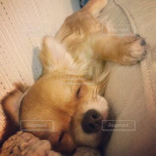 ソファーで居眠りの写真・画像素材[1486727]