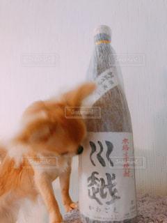 興味津々♫の写真・画像素材[1499665]