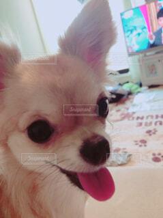 犬のアップの写真・画像素材[1534443]
