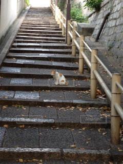 口縄坂と猫の写真・画像素材[1487208]