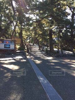 三保の松原に向かう参道の写真・画像素材[1574334]