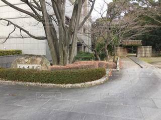 三の丸庭園の写真・画像素材[1594470]