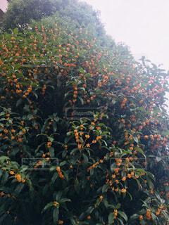 秋の写真・画像素材[1498165]