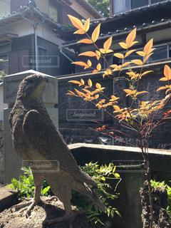 鷹の石像の写真・画像素材[1486469]