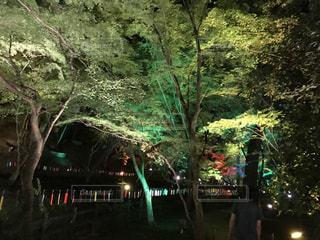 北野天満宮のライトアップの写真・画像素材[1502028]