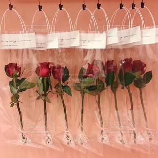 赤いバラの写真・画像素材[1502828]